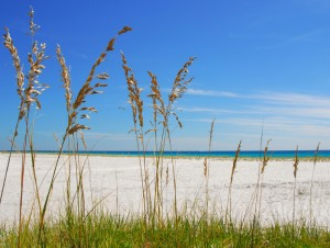 Sea Oats at Beach