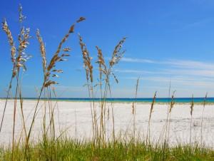 Sea Oats at Beach